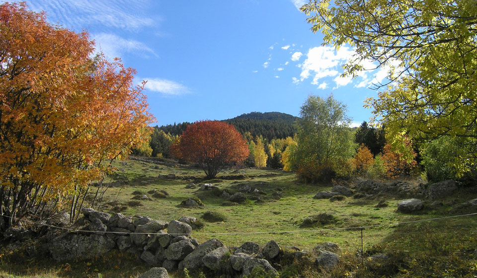 autumn colors - field behind the Orri